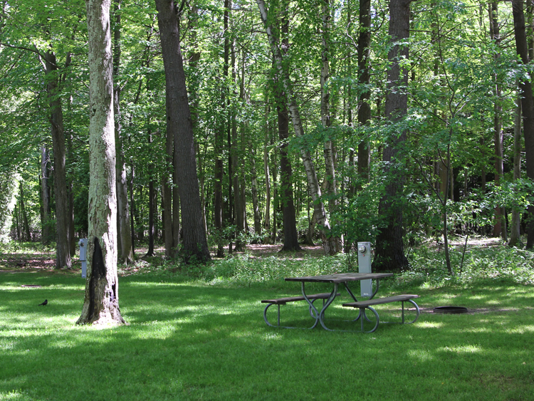 Our grassy, spacious campsites offer access to water and electric.